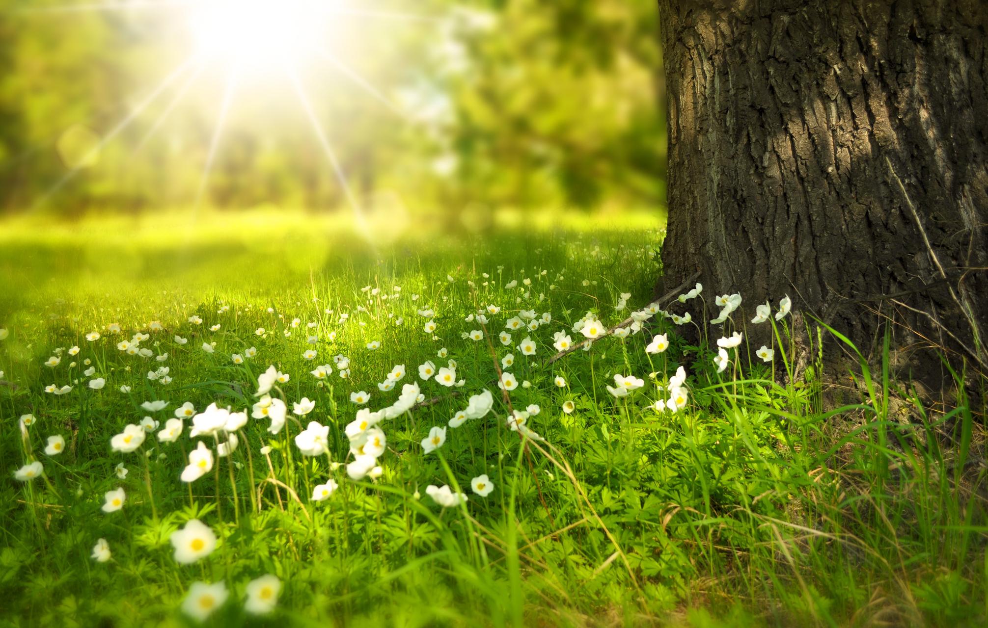 上帝醫治我的憂鬱症_spring-276014