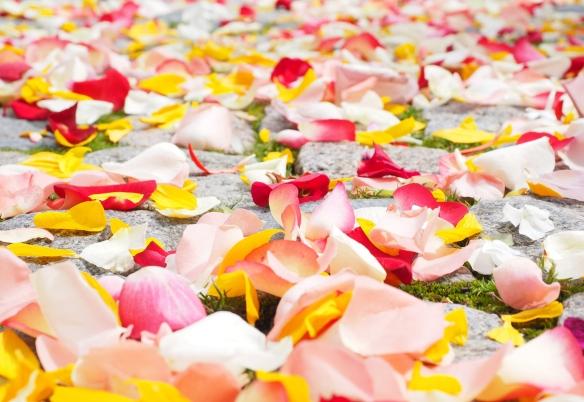 可以和他結婚嗎_rose-petals-693570