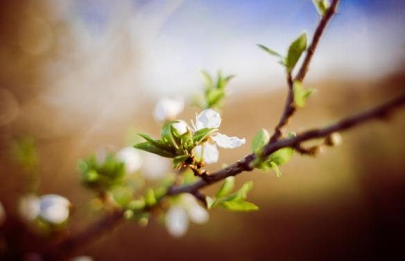 White flower on branch
