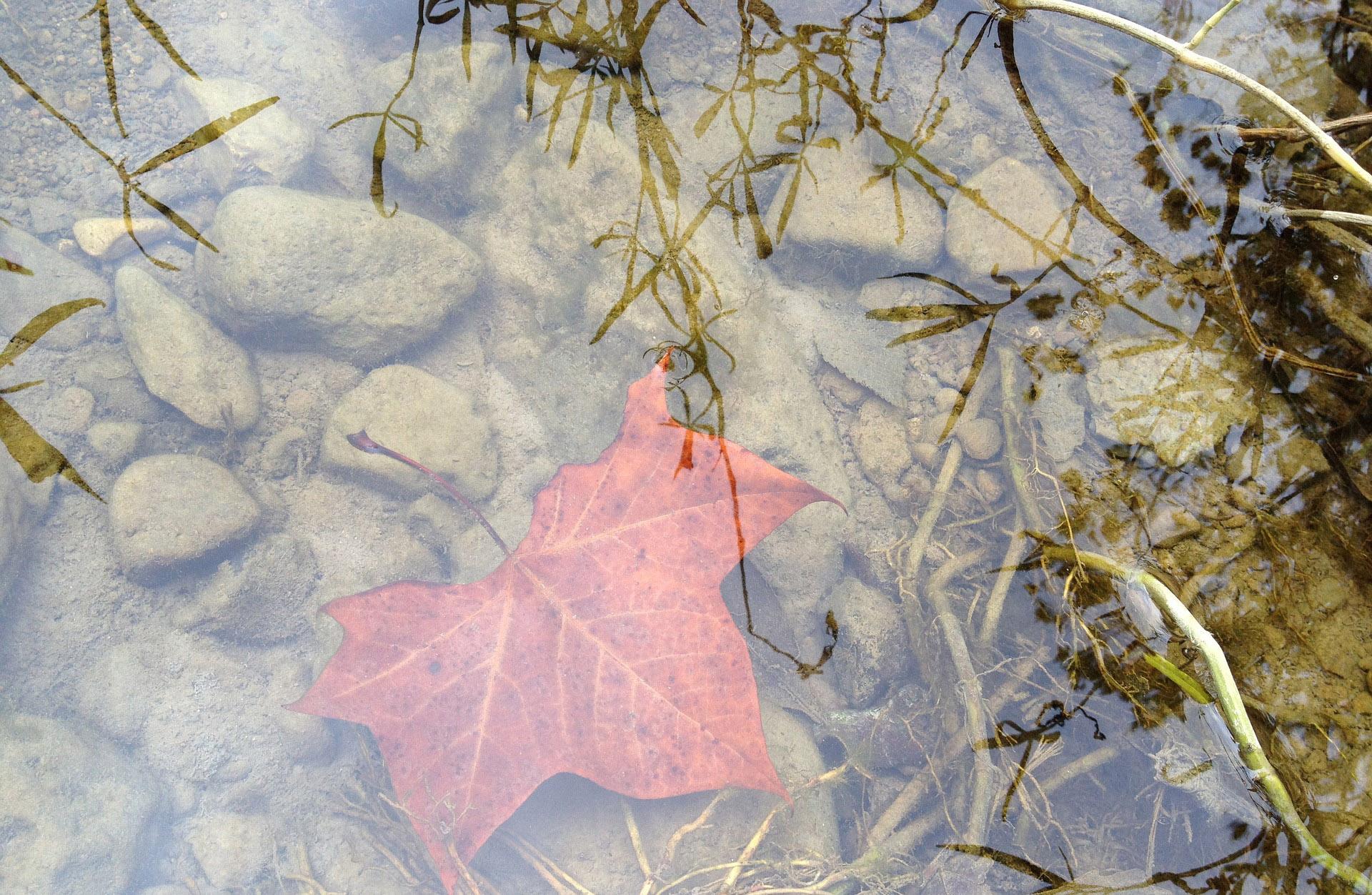 leaf-1188098_1920