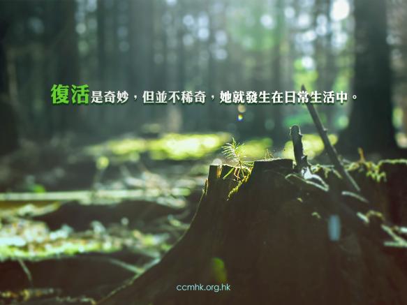 ccmFB_CT672_20180327
