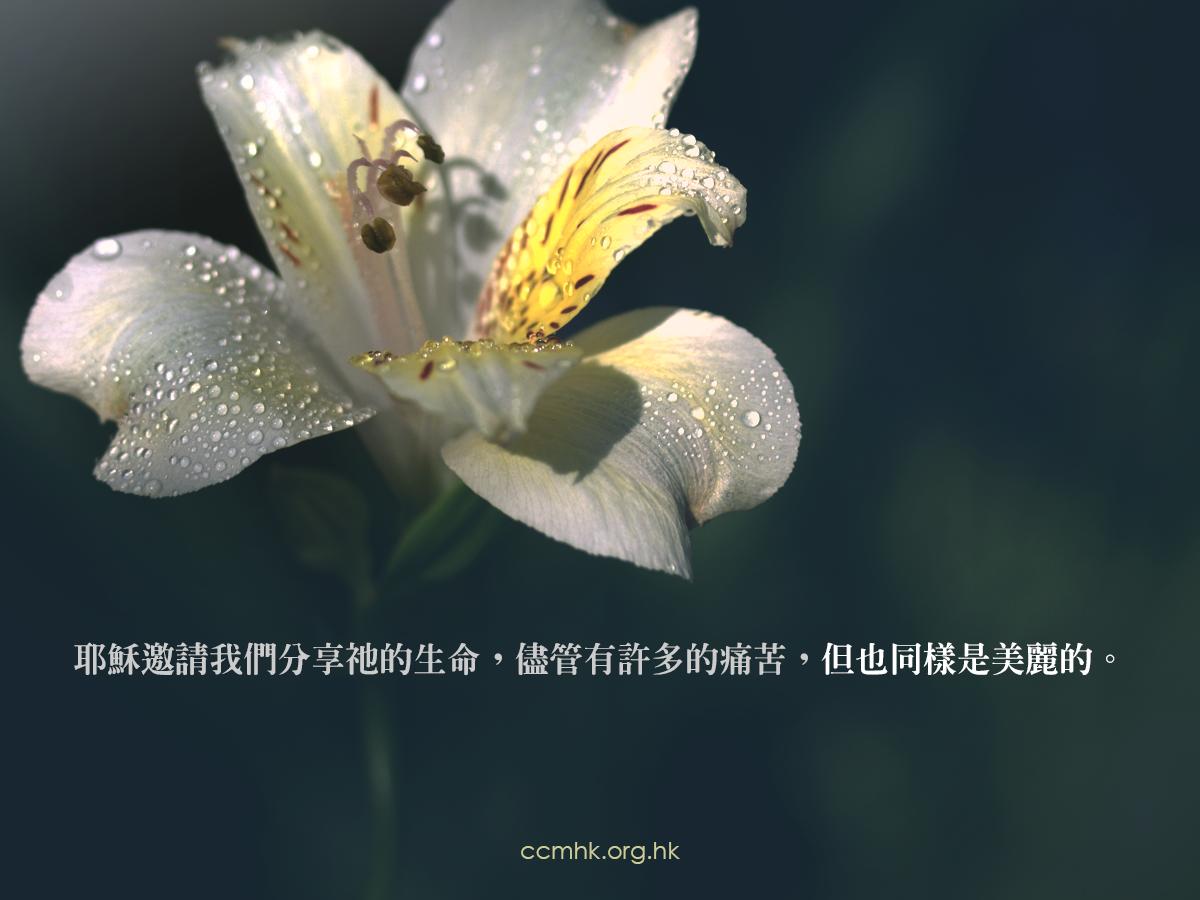 ccmFB_CT672_20190417